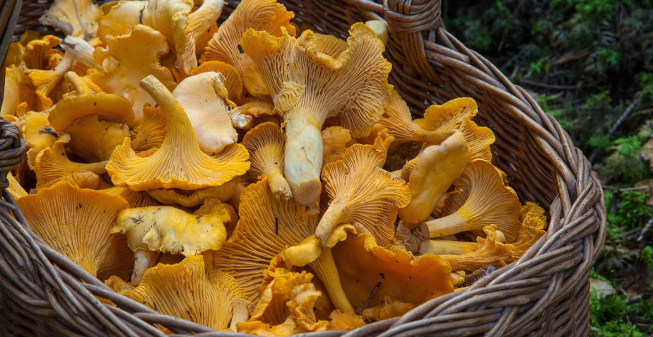 Mushrooms should be microwaved to seal in goodness, scientists say